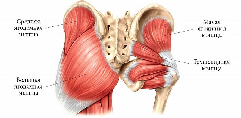 Грушевидная мышца таза