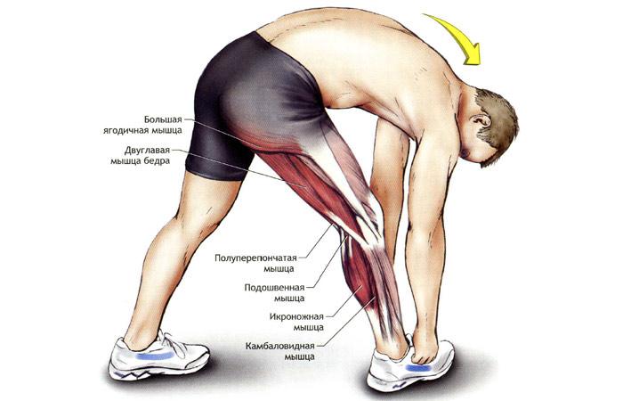 Большая мышца таза