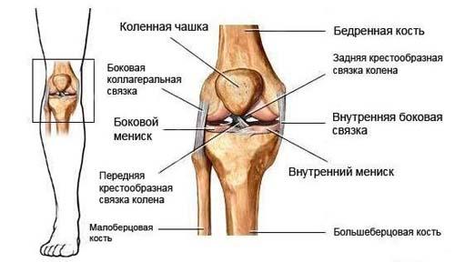 Выпадает из сустава колена книга про артроз коленного сустава