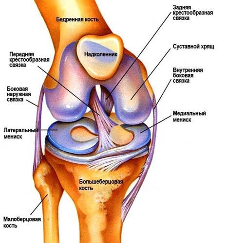 Патология коленного сустава лечение