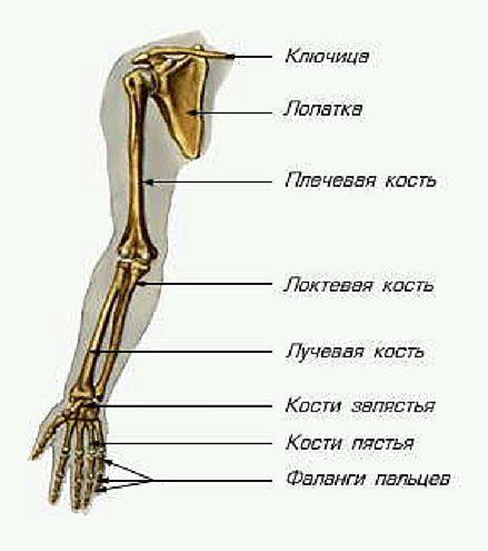 Симптомы и лечение основных болезней суставов рук список распространенных