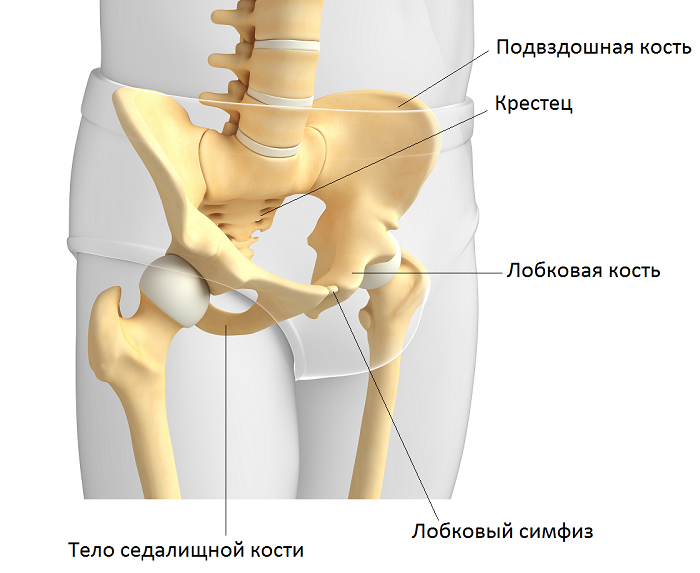 Тело седалищной кости